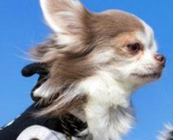 愛犬とのスキンシップの方法と長生きの関係!ワンコの平均寿命って?