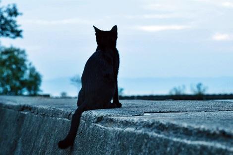 黒猫 【必見】夢を叶える手帳(ノート)の書き方!願望実現のテクニック