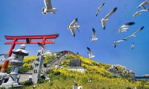 蕪島神社の5月が金運アップとウミネコ見物に最高!