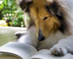 犬 食物アレルギー 原因 治療法 ドッグフード