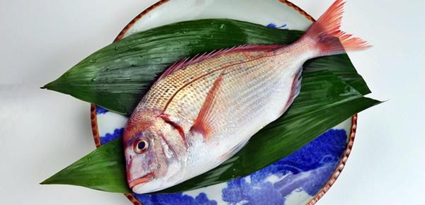 愛犬に食べさせてはいけない生魚