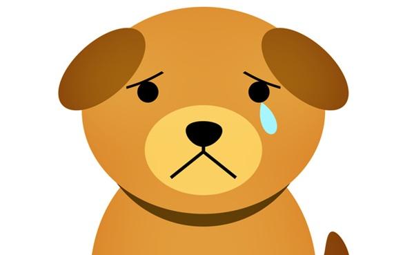 身体にいいご飯をちょうだいと泣く犬