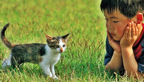 散歩の途中かわいい子猫と出会う男の子
