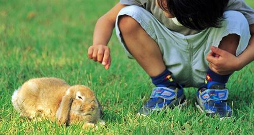 ウサギに夢中になる男の子