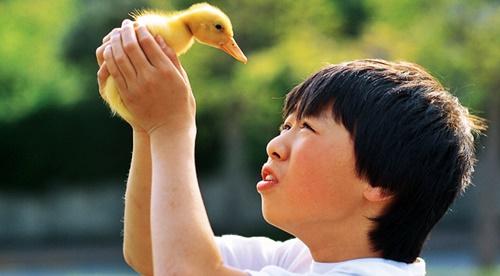 鳥のひなに興味津々の男の子