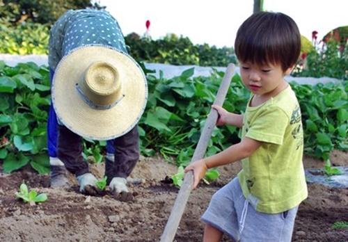 一生懸命畑仕事を手伝う男の子