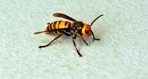 いちごハウスにはミツバチがたくさんいるかも?